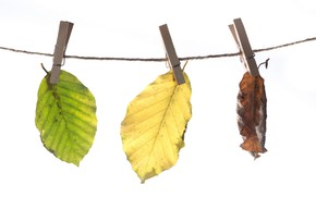 Картинка листья, прищепки, шнур