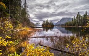 Картинка осень, озеро, островок