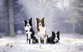 Обои природа, собаки, друзья