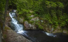 Картинка лес, вода, водопад