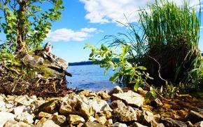 Картинка Зеленая трава, река, Волга, вода, лето