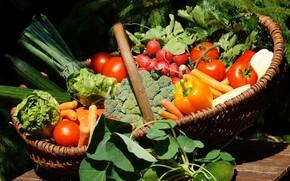 Картинка зелень, Овощи, перец, Помидоры, брокколи, Редис