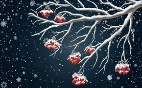 Картинка Зима, Минимализм, Снег, Фон, Новый год, Рябина, Праздник, Настроение, Ветвь