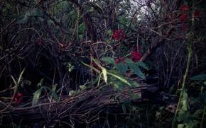 Картинка трава, листья, деревья, красный, ягоды, заросли, мрак, доски, кусты, тлен, бурьян