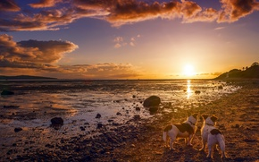 Картинка закат, собаки, берег, друзья