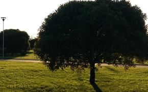 Картинка природа, дерево, тень