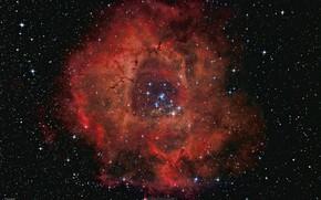 Картинка NGC 2237, эмиссионная, Rosette Nebula, Туманность Розетка