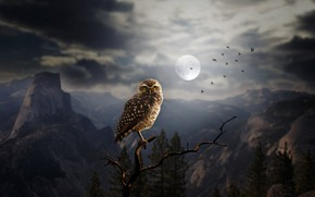 Обои лес, скалы, ночь, птицы, силуэты, луна, деревья, сова, арт, горы, ветка