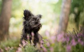 Картинка трава, природа, собака, чёрная
