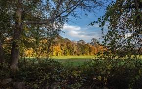 Картинка осень, лес, Заросли