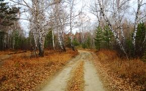 Картинка Осень, Fall, Листва, Дорожка, Autumn, Leaves, Path