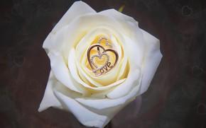 Обои роза, цветок, кулон, сердечки, украшение, макро