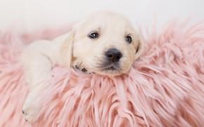 Картинка малыш, покрывало, щенок