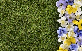 Картинка цветы, газон, весна, grass, травка, flowers, spring, lawn