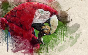 Картинка текстура, клюв, орех, Голова попугая, потёки краски