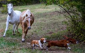 Картинка собаки, трава, лошади, кусты, лужайка, бегают