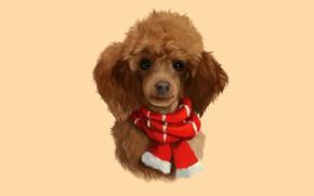 Картинка собака, шарфик, пудель
