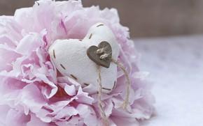 Картинка цветок, Праздник, сердечко, день влюбленных, пион
