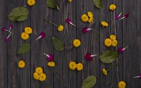 Обои листья, Желтые, Маргаритки, лепестки, цветы