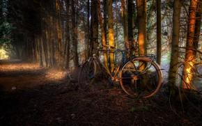 Картинка дорога, деревья, велосипед