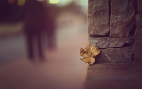 Картинка город, лист, улица