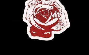 Картинка обои, роза, красная роза, цветок (цветы), обои на рабочий стол, роза любви, Rose love, обои …