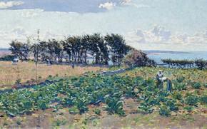 Картинка пейзаж, картина, Emanuel Phillips Fox, Грядки Капусты