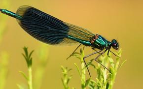 Картинка макро, желтый, природа, фон, растения, стрекоза, насекомое, зеленая, крылышки, блестящая