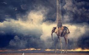 Обои пустыня, жирафослон, труба