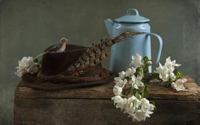 Картинка перо, шляпа, чайник, птичка, натюрморт, яблоня