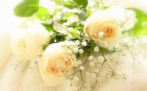 Картинка нежность, розы, гипсофила