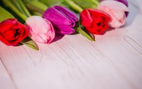 Картинка цветы, букет, colorful, тюльпаны, red, white, wood, flowers, tulips, spring, purple