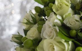 Картинка зелень, листья, цветы, розы, букет, букет роз, букет невесты
