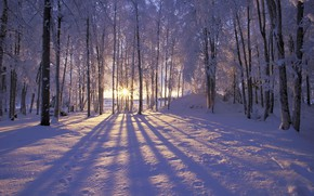 Картинка forest, Winter, trees, landscape, nature, snow, morning, sun, snowy