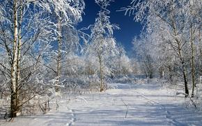 Картинка Зима, Деревья, Снег, Следы, Россия, Мороз, Russia, Winter, Frost, Snow, Trees