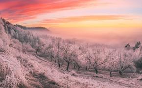 Картинка зима, иней, деревья, закат