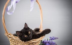 Картинка кошка, кот, цветы, фон, корзина, сирень