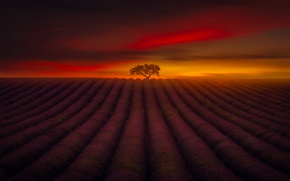 Картинка поле, небо, полосы, дерево