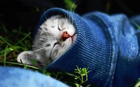 Обои кот, спит, котёнок, рукав, кошка