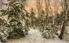 Картинка лес, снег, ёлки