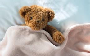 Обои игрушка, медведь, мишка, bear, teddy, bed, little, cute
