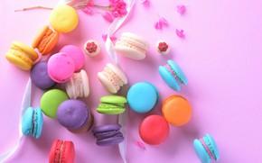 Картинка цветы, сладость, лента, пирожное, выпечка, макаруны