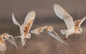 Картинка полет, птицы, природа, совы