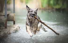 Картинка река, собака, палка