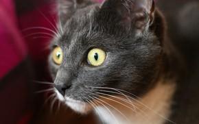 Картинка глаза, кот, усы, макро