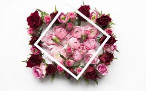 Картинка цветы, розы, red, розовые, pink, flowers, пионы, roses, peonies, frame, floral