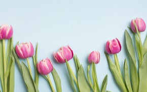 Картинка Цветы, Тюльпаны, Фон