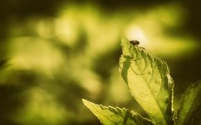 Картинка лист, фон, насекомое