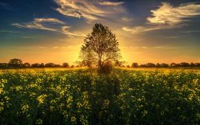 Картинка солнце, закат, цветы, дерево, луг