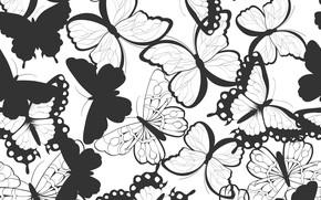 Обои черно-белый, Узор, Бабочки, Текстура